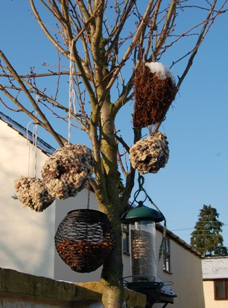 Pine cone feeders hanging in the tree