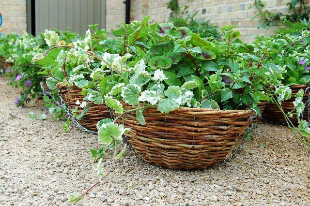 Hanging baskets 003