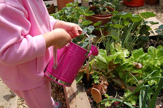 Pre-school garden - end of term report - little green fingers