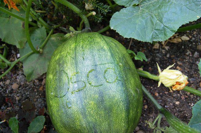 Names on pumpkins 002