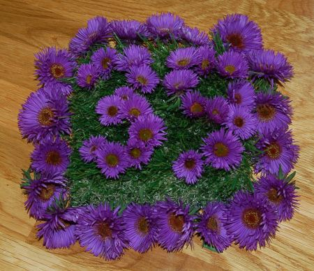 39 in asters 012