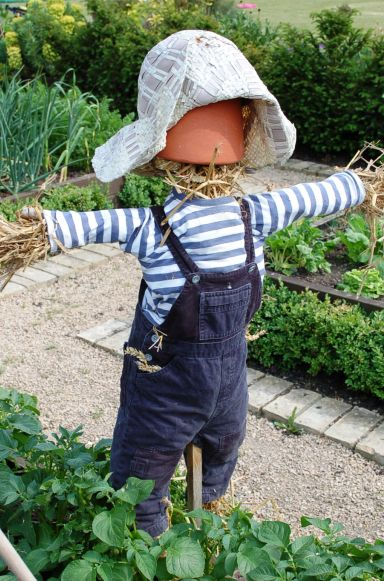 Mini scarecrow in veg garden