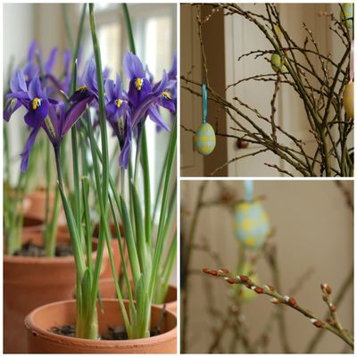 Iris reticulata and goat willow