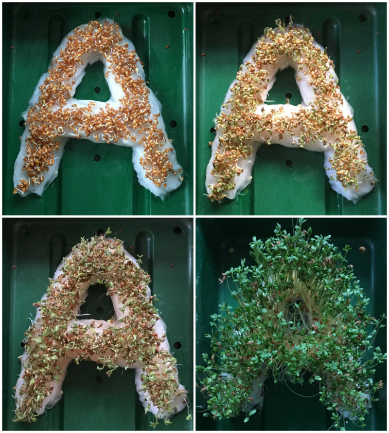 Collage of cress initials