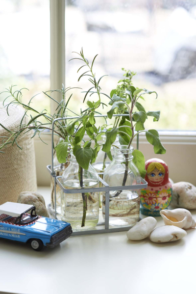 little green fingers: Indoor gardening with children